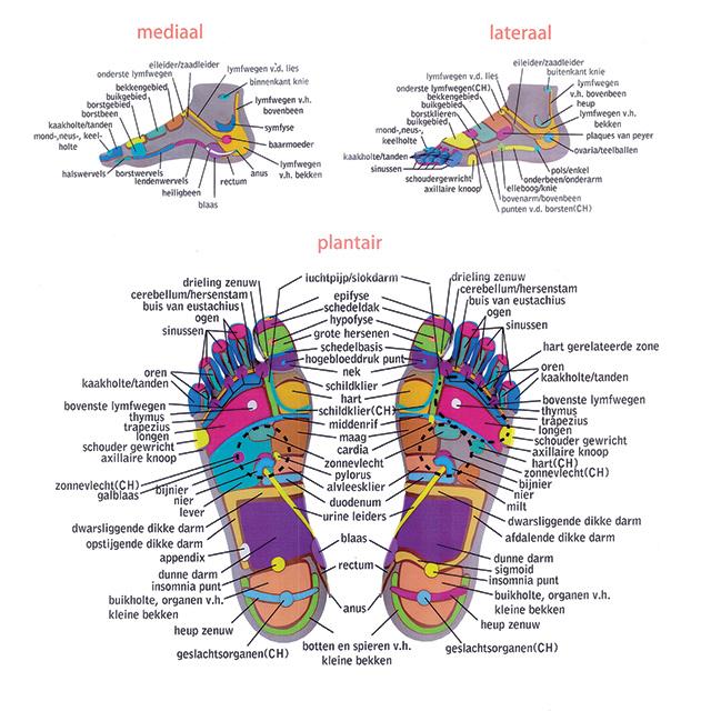 voetenkaart-in-kleur-en-lage-resolutie