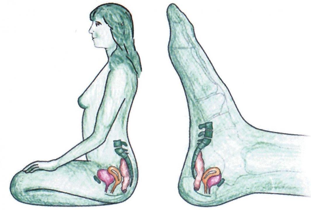 vrouwenorganen